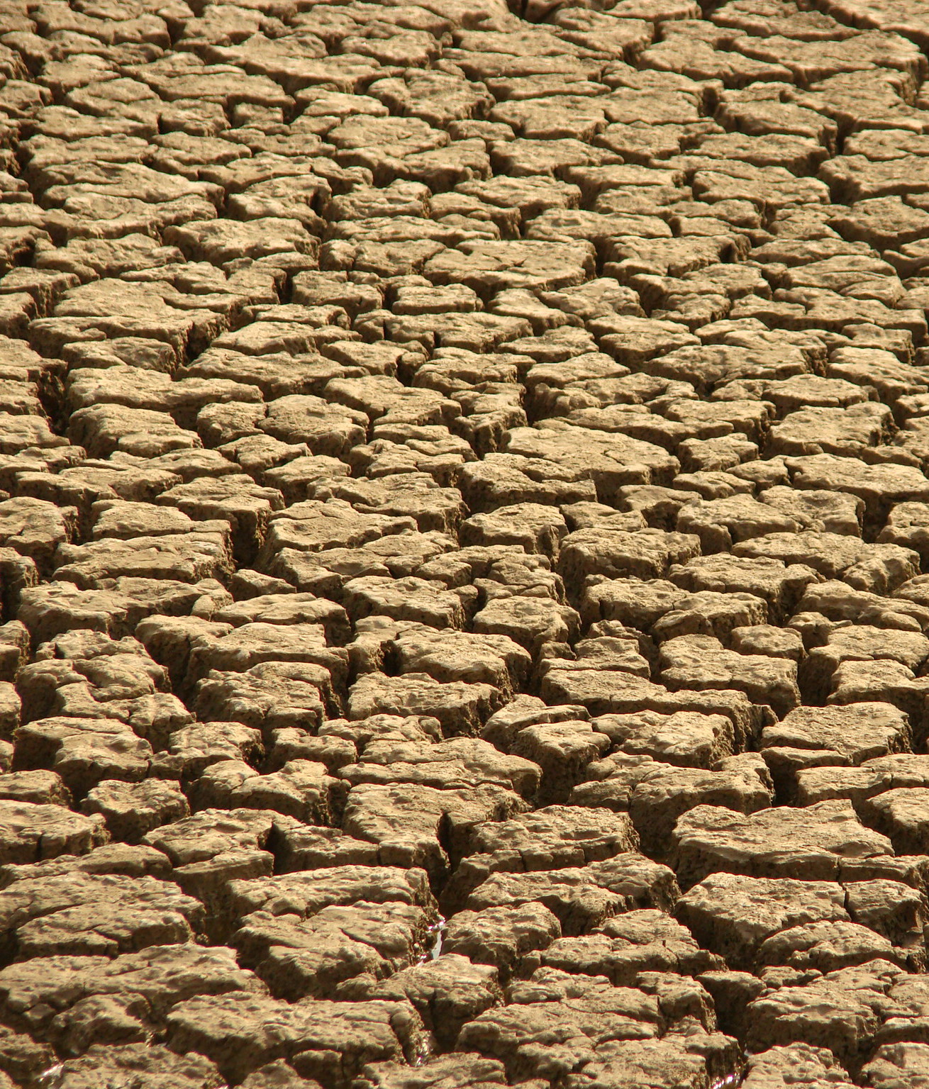 WCC praises commitment